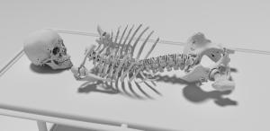 medical_plugin_bones_from_CT